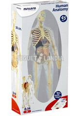 Menschliches Anatomie-Spiel Miniland 99060