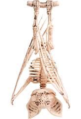 Murciélago Esqueleto